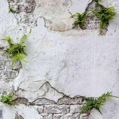 Plants and Brick Wall